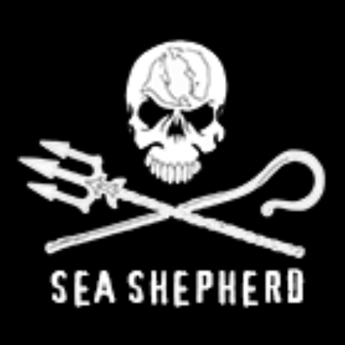 Picture of charity 'Sea Shepherd'